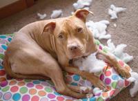 Foto Calmare un cane ansioso per il rumore