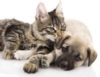 Foto Alcuni buoni motivi per sterilizzare il vostro animale domestico