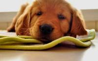 Foto Segni che il Cane sta per morire