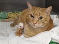 Foto Frattura del femore nel Gatto: cosa fare