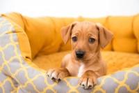Foto Infezione alla vescica (cistite) nel Cane