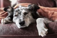 Foto Metastasi nel Cane: sintomi e cure