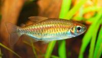 Foto Come fa il pesce a respirare sott'acqua?