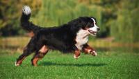 Foto Benefici della Glucosamina per il Cane