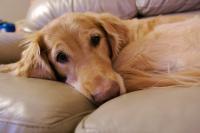 Foto Convulsioni nel Cane: sintomi e cura
