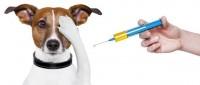 Foto Cancro Cane: un vaccino per curarlo