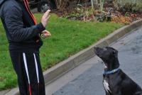 Foto Insegnare al cane il suo nome