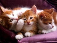Foto Come aiutare il Gatto a partorire