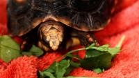 Cosa mangia la Tartaruga?