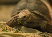 Cibo proibito per la tartaruga