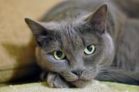 Foto Cistite nel Gatto: sintomi e cura