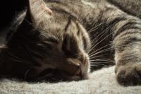 Segni che il Gatto sta per morire