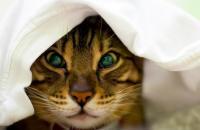 Foto Perchè il Gatto starnutisce?