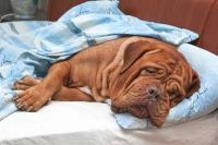 Foto Problemi di digestione nel Cane