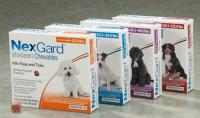 Foto Afoxolaner (NexGard) - Farmaci per Cani