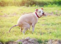 Foto Cane non fa cacca: cause e trattamento