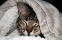 Foto Il mio Gatto ha la diarrea: cosa devo fare?