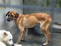 Foto Senato, stretta sui maltrattamenti agli Animali