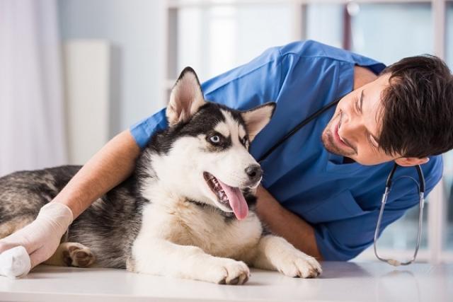 giardia cane rimedi naturali viermi umani simptomele de vierme