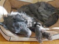 Foto Ernia disco nel Cane: cause, sintomi e trattamento