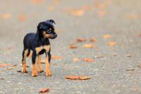 Foto Ho smarrito il Cane. Cosa faccio?