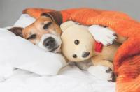 Foto Disturbi del sonno nel Cane