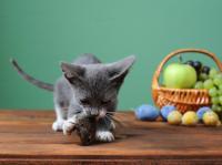 Foto Alimenti pericolosi per il Gatto