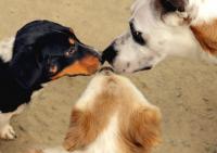 Foto Il comportamento del Cane