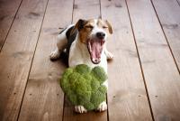 Foto Il Cane può mangiare il cavolfiore?