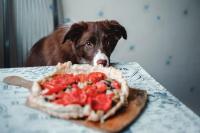 Foto Il Cane può mangiare pomodori?