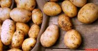 Foto Il Cane può mangiare patate?