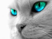 Foto Cosa vede un Gatto ?