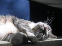 Foto Le fusa del Gatto fanno bene al cuore e alle ossa.
