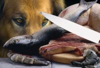 Foto Il Cane può mangiare pesce?
