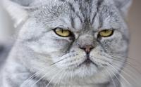 Foto Il gatto ha il singhiozzo, cosa fare?