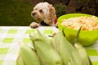 Foto Il Cane può mangiare mais?