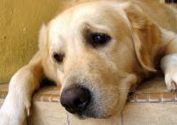 Foto Cosa fare in caso di Ritrovamento di un Cane o Gatto Smarrito o Abbandonato?  Scopriamo insieme le l