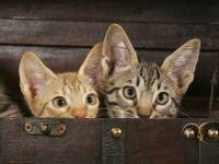 Foto Perchè il gatto ha paura o è timido?