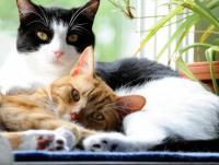 Foto Quando sterilizzare il gatto maschio?
