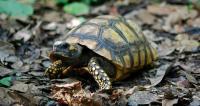 Foto Perchè la tartaruga non ha fame?
