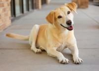 Foto Perchè il Cane si morde la coda?