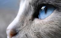 Foto I gatti hanno 7 vite?