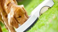 Foto Il mio cane non mangia | Perchè il cane rifiuta il cibo
